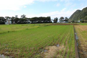 8月中旬には稲刈り終了