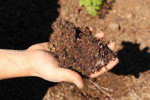 マルチ用の堆肥